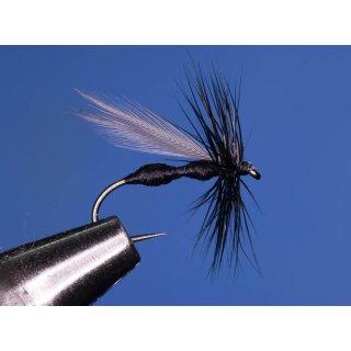 Black Ant - schwarze Ameise