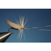 Silver Horn - Silberhörnige Fliege